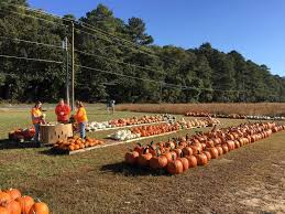 Maryland Pumpkin Patches Near Baltimore by Adkins Farm Market Pumpkin Patch Maryland Haunted Houses