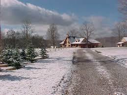 Leyland Cypress Christmas Tree Farm by Farms Tennessee Christmas Tree Growers