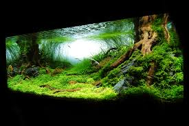 Aquarium: Aquascape Plants | Aquascape Designs | Aquascape Rocks Aquascape Pond Pump Problems Tag Aquascape Pond Products Pumps Red Rock Journal By James Findley The Green Machine Cuisine Live Designs Set Up Idea Fish Aquascapes Water Garden Installation Setup Articles With Freshwater Aquarium Community Tank Post Your Favorite Natural Ipirations And Adventures In Aquascaping Tanks Books Lets Start With A Ada Learn All The Basics Of Niwa Pisces Amazing Amazon Beautify Home Unique