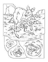 Free Animal Coloring Book Pages To Printfrom National Geographic
