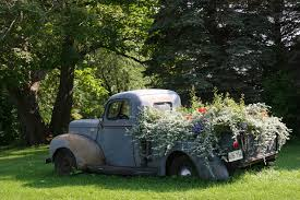 Flowers Are Past Their Prime But Still Lovely In This Vintage Ford Pick