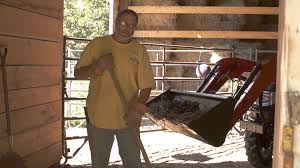 Cleaning Your Barn Stalls For Your Horses Health - YouTube How Much Does It Cost To Build A Horse Barn Wick Buildings Pole Cstruction Green Hill Savannah Horse Stall By Innovative Equine Systems Redoing The Barn Ideas For Stalls My Forum Priefert Can Customize Your Barns Barrel Racing 10 Acsmore Available With 6 Pond Pipe Fencing Amazing Stalls The Has Large Tack Room Accsories Rwer Rb Budget Interior Ideanot Gate Door Though Shedrow Shed Row Horizon Structures Httpwwwfarmdranchcomproperty5acrehorse