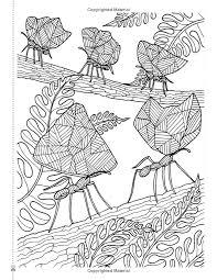 Secret Eden Anti Stress Art Therapy Colouring Book Amazoncouk