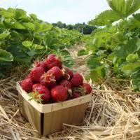 Best Pumpkin Apple Picking Long Island Ny by 10 Long Island Apple Picking Spots Long Island Pulse Magazine