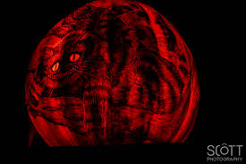 Cheshire Cat Pumpkin Carving Template by 2014 Roger Williams Jack O Lantern Spectacular Scott Sousa