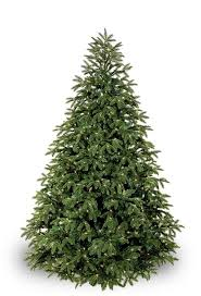 Leyland Cypress Christmas Tree by Best 25 Fraser Fir Ideas That You Will Like On Pinterest