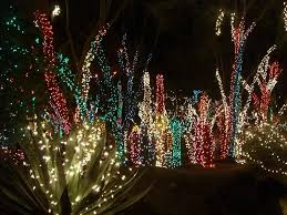 Barcana Christmas Trees Dallas Texas by Christmas Cactus Light Christmas Lights Decoration