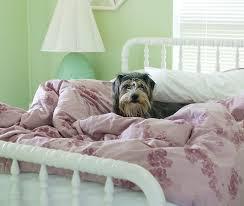wohin mit meinem hund wenn besuch kommt der angst vor ihm
