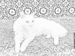 Coloriage Chat Angora Turc Lily 100 1890 à Imprimer Pour Les Enfants