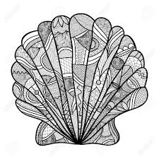 Seashell Hand Drawn Shell