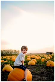 The Great Pumpkin Patch Arthur Il by Thankful The Great Pumpkin Patch Arthur Il Dillybar Photography