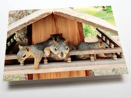Squirrel Feeder Adirondack Chair by Squirrel House With Porch I So Need To Build One Of These Birds