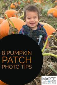 Conners Pumpkin Patch Jacksonville Fl by Baby Pumpkin Diy Baby Pinterest Babies Baby Pictures