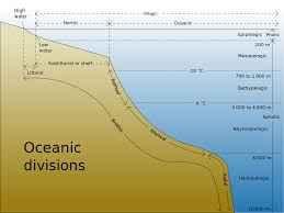Earth Floor Biomes Desert by Coastal And Open Ocean Biomes Asu Ask A Biologist