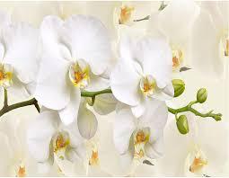 decomonkey fototapete orchidee 400x280 cm wandbild