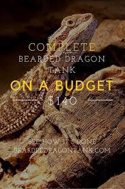 Bearded Dragon Shedding A Lot by 82 Best Bearded Dragon Images On Pinterest Dragon Pet Bearded