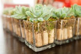 215 Per Centerpiece For Wine Country Themed Wedding Succulent Sits Atop 9 Corks And