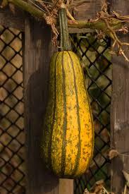 Ray Villafane Pumpkins by Pumpkins Archives Plant Talk