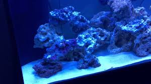 Aquascaping My First 90 Gallon Saltwater Fish Tank. Any Thoughts ... Home Design Aquascaping Aquarium Designs Aquascape Simple And Effective Guide On Reef Aquascaping News Reef Builders Pin By Dwells Saltwater Tank Pinterest Aquariums Quick Update New Aquascape Of The 120 Youtube Large Custom Living Coral Nyc Live Rock Set Up Idea Fish For How To A Aquarium New 30g Cube General Discussion Nanoreefcom Rockscape Drill Cement Your Gmacreef Minimalist 2reef Forum