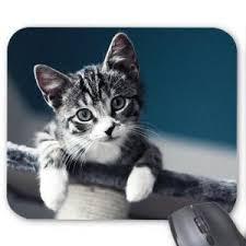 tapis de souris chats prix pas cher cdiscount