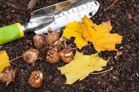 6 things to before planting fall bulbs lombardo homes