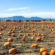 Pumpkin Patch Parker County Texas by Rock Creek Farm 22 Photos U0026 52 Reviews Pumpkin Patches 2005