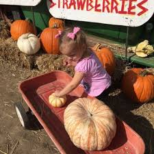 Bishops Pumpkin Farm Employment by Vierra Farms 149 Photos U0026 129 Reviews Farmers Market 3010