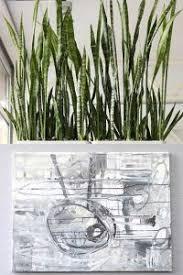feng shui mit pflanzen für esszimmer und co blumen kuhn