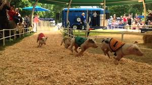 Motleys Pumpkin Patch by Pig Races At Multnomah County Fair Youtube