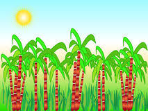 Sugarcane Clipart And Illustrations
