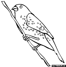 Strawberry Finch Coloring Page