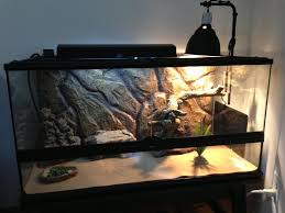 Basking Lamp Wattage For Bearded Dragon by New Beardie Owner Here Bearded Dragon Forum