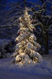 Prelit Christmas Tree That Puts Up Itself by 25 Best Christmas Scenes Images On Pinterest Merry Christmas