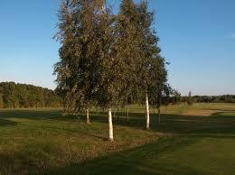 Christmas Tree Saplings Ireland by 25 Norway Spruce Christmas Tree Seedlings 3 Yrs Old Size 25 40cm