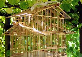 Free Images : Jungle, Backyard, Asia, Cage, Birds, Bamboo ... Some Ways To Keep Our Backyard Birds Healthy Birds In The These Upcycled Diy Bird Feeders Are Perfect Addition Your Two American Goldfinches Perch On A Bird Feeder Eating Top 10 Backyard Feeding Mistakes Feeder Young Blue Jay First Time Youtube With Stock Photo Image 15090788 Birdfeeding 101 Lover 6 Tips For Heritage Farm Gardenlong Food Haing From A Tree Gallery13 At Chickadee Gardens Visitors North Andover Ma