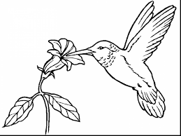 Bee Hummingbird Coloring Pages
