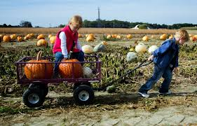 Spring Hope Pumpkin Festival 2014 by Best Pumpkin Patches In Orange County Cbs Los Angeles