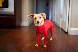 Shed Free Dogs Pictures by Leotards For Dogs Are Officially A Thing The Dodo
