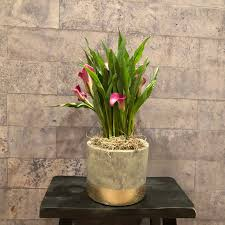 100 Blooming House Assorted Plants In Trophy Club TX Of Flowers DFW