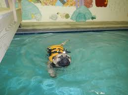 SWIMMING AS A TRAINING TOOL!   Holiday Barn Holiday Barn On Twitter We Are Happy To Donate This Adorable A Place Where Doggies Paddle Life Richmondcom Ipirations West Elm Hollywood Georgetown Letters Santa Paws Bellas Visits Holiday Barn Pet Resorts Doggie Daycare April Unique Tradition Lives In Valentines Va News And The History Of Pet Resorts Skye Is Proud Present Holidaybarn 30 Cool Sites Visit Within 100 Miles Richmond Travel