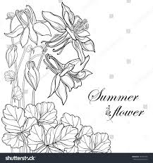 Vector Bouquet With Outline Aquilegia Or Columbine Flower Bud And Leaf In Black Isolated On