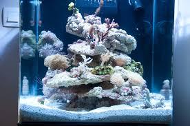 aquarium nano eau de mer mise en route de l aquarium reef nature