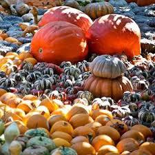 Pumpkin Patch In Homer Glen Illinois by 190 Best Pumpkin Festivals Images On Pinterest Fall Decorations