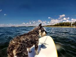Dog Friendly Hotels in Sanibel and Captiva Island