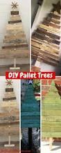 Christmas Tree Saplings Ireland by Best 20 10 Tree Ideas On Pinterest Flowering Crabapple Tree