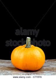 Seymour Pumpkin Festival Parking by Large Pumpkin On Black Stock Photo Royalty Free Image 125863599