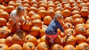 Pumpkin Patch Western Massachusetts by Searching For The Great Pumpkin Here U0027s A Guide To San Diego