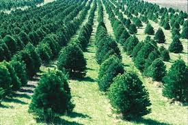 Christmas Tree Types Canada by Map Where Christmas Trees Are Grown In Canada Canadian Geographic