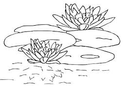 Lily Coloring Pages Water Page Image Images Trend Medium Size Frog On