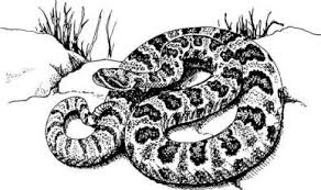 rattlesnakes and their control